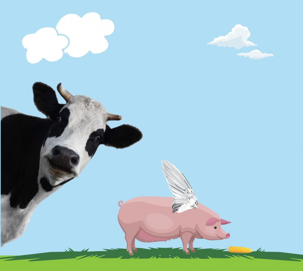 cow pig wings illustration